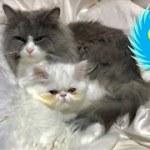初めての大型台風に怖がりビビる猫がかわいい!w