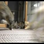 コロが猫たちをびっくりさせる