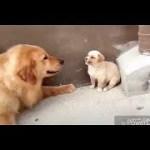 「絶対笑う」最高におもしろ犬,猫,動物のハプニング, 失敗画像集 #202