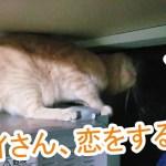 ヤモリに恋をした猫の仕草がかわいい