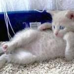 「猫かわいい」 すごくかわいい子猫 – 最も面白い猫の映画 #260