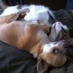 「絶対笑う」最高におもしろ犬,猫,動物のハプニング, 失敗画像集 #197