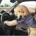 「絶対笑う」最高におもしろ犬,猫,動物のハプニング, 失敗画像集 #77