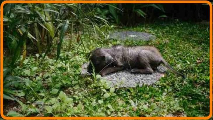 【感動】道の端にうずくまっていた子犬を保護。ある女性は、それをきっかけにバリ島の野良犬たちを助ける存在に!【世界が感動!涙と感動エピソード】