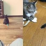 猫ちゃんが狩ってもってきたお土産が面白いけど、マジびびるw~The souvenir that the cat brought in hunting is funny, but surprising.