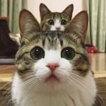 「猫かわいい」 すごくかわいい子猫 – 最も面白い猫の映画 #273