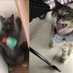 腹がよじれたw面白い猫ちゃんの行動&表情が見ているだけで癒される♡~Funny cat's behavior & facial expression healed.
