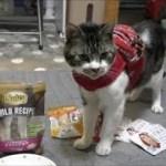 リキちゃんの可愛いリュック☆ペットショップで買ってきたものを猫と一緒に見てみよう☆リュックハーネス【リキちゃんねる 猫動画】Cat video キジトラ猫との暮らし