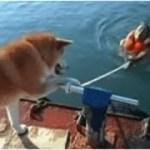 「面白い動物」あり得ないことをする犬, 猫・おもしろ犬, 猫のハプニング, 失敗集 #51