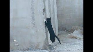「面白い動物」あり得ないことをする犬, 猫・おもしろ犬, 猫のハプニング, 失敗集 #38