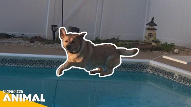 【 かわいい犬】はしゃぎ過ぎw世界の面白いペットの動画 #09【Video Pizza】
