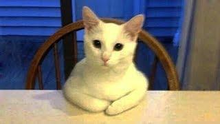 「猫かわいい」 すごくかわいい子猫 – 最も面白い猫の映画 #270