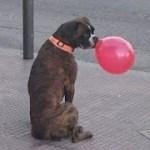 「面白い動物」あり得ないことをする犬, 猫・おもしろ犬, 猫のハプニング, 失敗集 #54