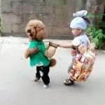 「面白い動物」あり得ないことをする犬, 猫・おもしろ犬, 猫のハプニング, 失敗集 #19