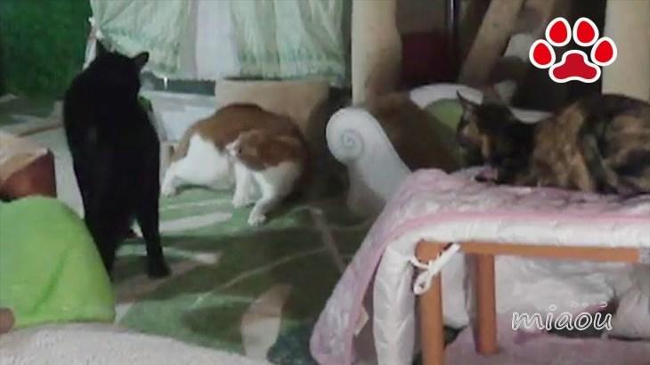 猫部屋おもしろハプニング集 猫部屋の出来事 2018 3月編Cats room's funny moments 2018  March