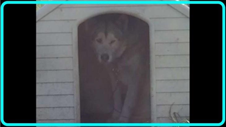 【感動】ブリーダーからネグレクトを受け人間を怖がる犬…心を閉ざし犬小屋に閉じこもっていた犬が、心優しい男性と出会い過去を乗り越える!!【世界が感動!涙と感動エピソード】