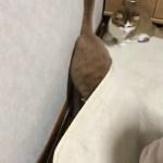 カーペットの下を譲ってあげる猫がかわいい
