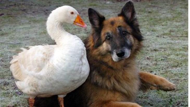 「絶対笑う」最高におもしろ犬,猫,動物のハプニング, 失敗画像集 #371