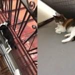 不法侵入した猫ちゃんの自由すぎる行動がじわじわ面白いw~Funny behavior of an illegal invading cat is too free.