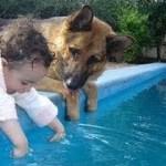 赤ちゃんは水のプールで泳いだり、かわいい子犬を支援 – 犬と赤ちゃんは親友です