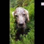 「おもしろ犬」泥んこ遊び楽しくて、どうしても帰りたくない犬の反応が超かわいい #2