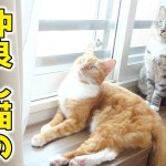 仲良し猫の日向ぼっこ。猫ズの穏やかな昼下がり【猫 かわいい】
