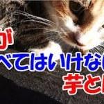 猫と毒芋?!-かわいい猫なのに犬として育てられた猫54