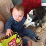 #1【犬と赤ちゃん】かわいい赤ちゃんと犬絶妙な関係・何をされても怒らない犬たち