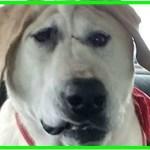 【感動】虐待されずっと孤独だった生まれつき顔がゆがんだ犬…保護され家族を得ると、とびきりの笑顔を見せる!【世界が感動!涙と感動エピソード】