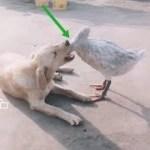 「面白い動物」あり得ないことをする犬, 猫・おもしろ犬, 猫のハプニング, 失敗集 #95