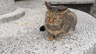 台湾の猴硐(ホウトン)猫村から感動猫動画のライブストリーム