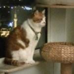 驚き!猫友達が玄関前に現れたのを室内から察知する瞬間の映像!