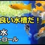良い水槽だ!人馴れしている可愛いお魚!湧き水コントロール!
