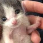 【感動】子猫は救ってくれた男性をお父さんと思い込んで、とっても甘えん坊に!【世界が感動!涙と感動エピソード】