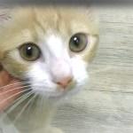 銀行に行ったら子猫を貰ってと言われる!可愛い子猫はお金を盗もうとしたw