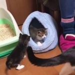 生後25日の子猫の体重測定がかわいい