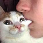 おかしい猫 – かわいい猫 – おもしろ猫動画 HD #257