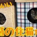 かわいい2階の住猫たち♪の巻【うちの子4にゃんず】