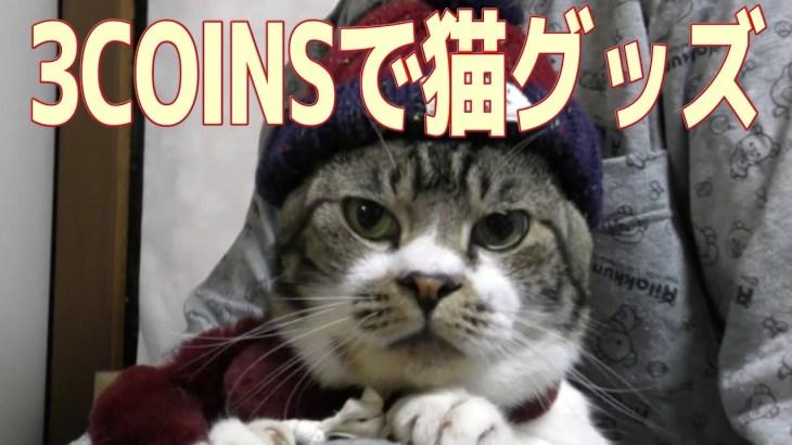 超かわいい♥猫に冬の装い☆スリーコインズでペット用の服を買ってみた☆リキちゃん冬支度・ファッションショー☆スリコ・3COINS【リキちゃんねる 猫動画】Cat video キジトラ猫との暮らし