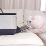 プリンターが気になる猫の反応が素直で可愛いwww
