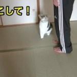 抱っこに味を占めた猫。【猫】【かわいい】