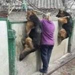 「面白い動物」あり得ないことをする犬, 猫・おもしろ犬, 猫のハプニング, 失敗集 #140