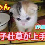 赤ちゃん猫 しっぽの動きが女の子って感じでかわいい❤️3日目。むぎさらkitten