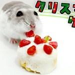 """ハムスター 専用‼️""""クリスマスケーキ"""" 作ってみた かわいい高クオリティ✨"""