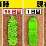 科学者が発見したプラスチックを食べる細菌が凄い