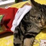 朝起きたらサンタの靴下から可愛い子猫が顔を出してた件w