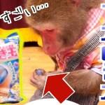 【化学の不思議】「つかめる水」にお猿さんが感動…!!