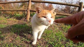 ちょっとビビりな野良猫を撫でてみるとカワイイ反応が帰ってきた