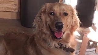 【感動】大切な親友を失った犬・・ある日、飼い主が帰宅すると、そこには驚きの光景が!【世界が感動!涙と感動エピソード】