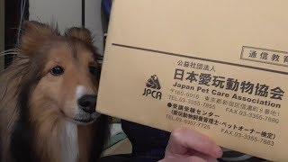 【可愛いシェルティ】愛玩動物1級合否通知届きました+お知らせ